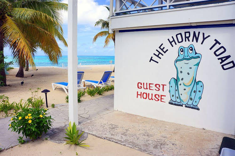 The Horny Toad Guesthouse