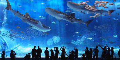 Lotte World + Aquarium
