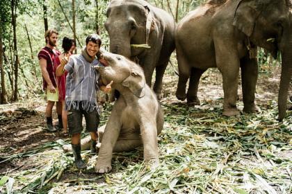 Elephant Day Care: Feed And Bathe Elephants In A Jungle Sanctuary