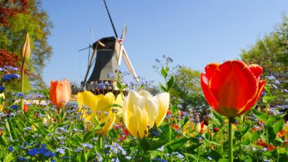 ทัวร์เที่ยวชมสวนดอกไม้ที่ใหญ่ที่สุดในโลกที่เมือง Keukenhof ด้วยรถรับส่งจากใจกลางเมือง Rotterdam