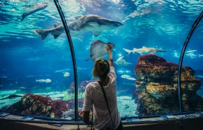 Barcelona Aquarium: Skip The Line