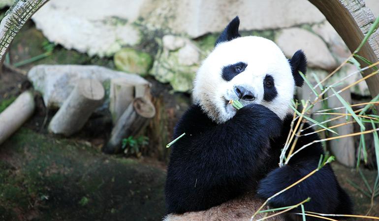 TraveliGo : Tours Package Tour Chiangmai Zoo 1 Day TATTH6350
