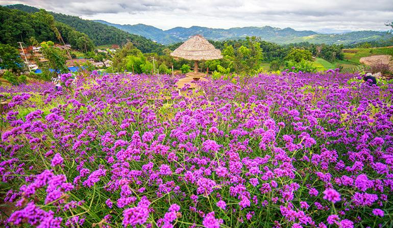 TraveliGo : Tours Package Tour Chiangmai Moncham 1 Day TATTH6354